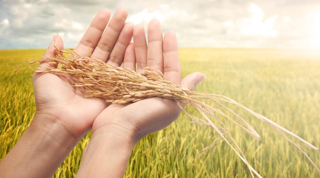 Malın ve Servetin Şükrü: Zekât